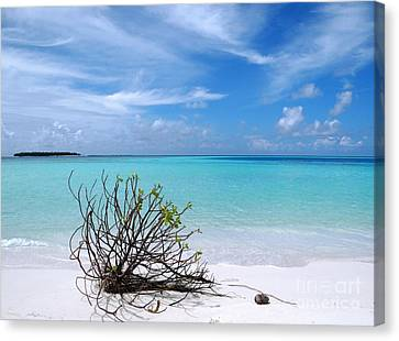 Maldives 12 Canvas Print by Giorgio Darrigo
