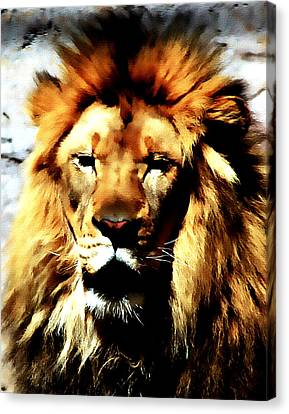 Male African Lion 2 Canvas Print