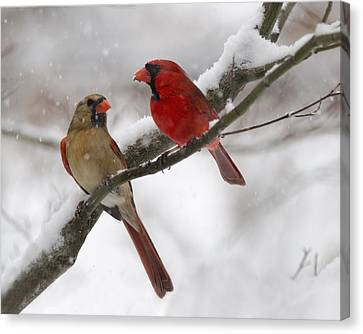 Male And Female Cardinal Canvas Print