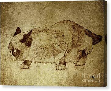 Male Cat Hunts At Night Canvas Print