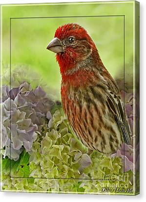 Canvas Print featuring the photograph Male Finch In Hydrangesa by Debbie Portwood