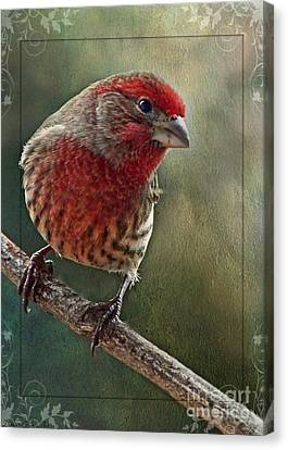 Male Housefinch With Green Texture And Decorations Canvas Print by Debbie Portwood