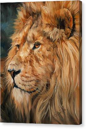 Male Lion Canvas Print by David Stribbling