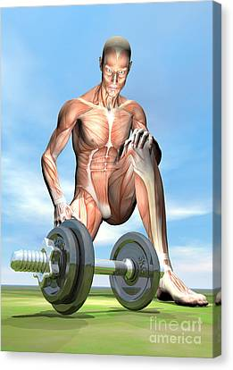 Male Musculature Looking At A Dumbbell Canvas Print by Elena Duvernay