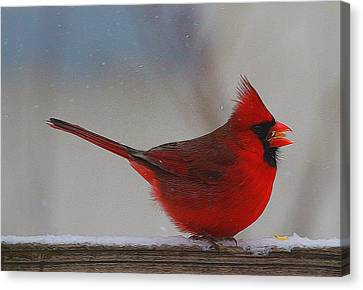 Male Northern Cardinal In Winter Canvas Print