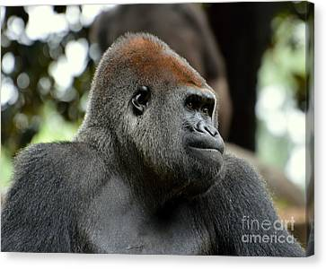Canvas Print featuring the photograph Male Silverback by Lisa L Silva