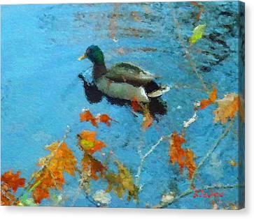 Mallard Canvas Print by David Klaboe