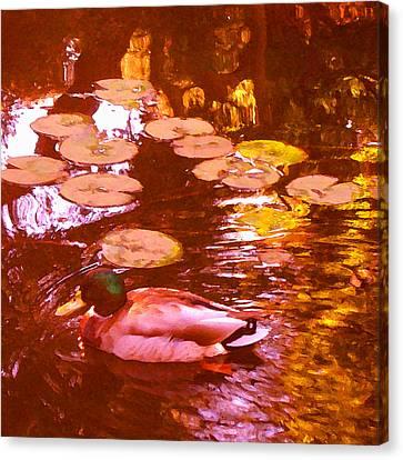 Mallard Duck On Pond 3 Square Canvas Print by Amy Vangsgard