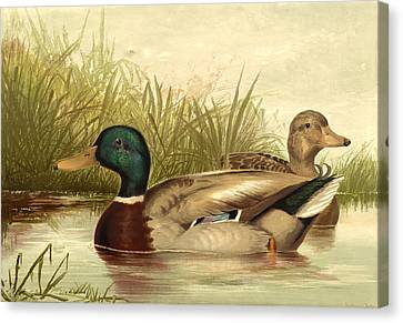 Mallard Ducks Canvas Print by Gary Grayson