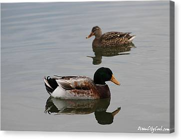 Mallard Ducks Reflecting Canvas Print by Robert Banach