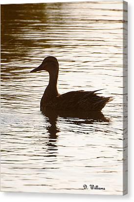 Mallard Silhouette Canvas Print