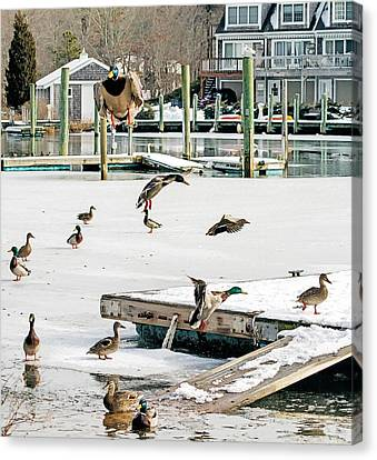 Canvas Print featuring the photograph Mallards In Motion by Constantine Gregory