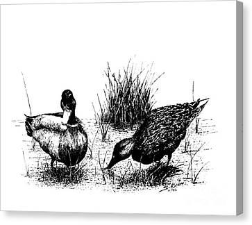 Mallards In The Marsh Canvas Print
