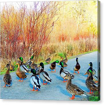 Canvas Print featuring the photograph Mallards In The Park by Karen Horn