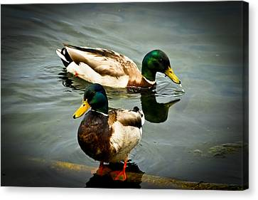 Mallards On Mendota Canvas Print