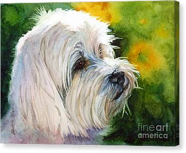 Maltese Canvas Print - Maltese by Bonnie Rinier