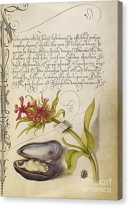 Maltese Cross, Mussel, And Ladybird Canvas Print