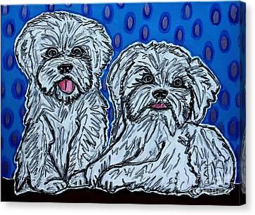 Maltese Duo Blue Bg Canvas Print