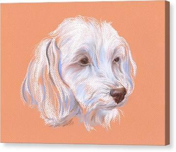 Maltipoo Portrait Canvas Print by MM Anderson