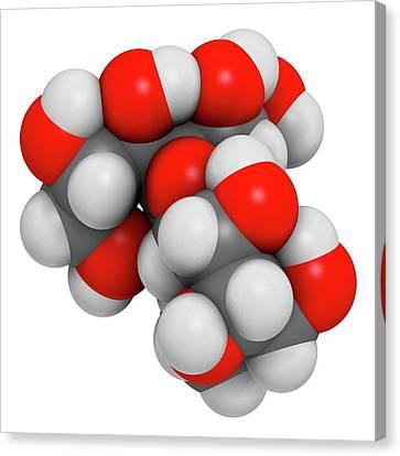Maltitol Sugar Alcohol Sweetener Molecule Canvas Print by Molekuul