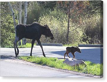 Mama And Baby Moose Canvas Print