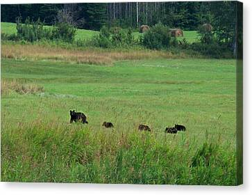 Canvas Print featuring the photograph Mama Bear And 4 Cubs by Mary Lee Dereske