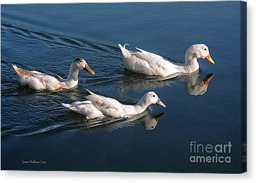 Canvas Print featuring the photograph Mama Duck Leads The Way by Susan Wiedmann