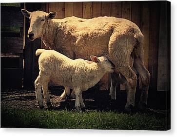 Mama Sheep And Baby Lamb Canvas Print by Maria Angelica Maira
