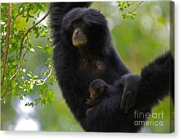 Mamas Hammock Canvas Print by Ashley Vincent