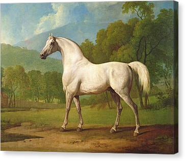 Mambrino Canvas Print by George Stubbs