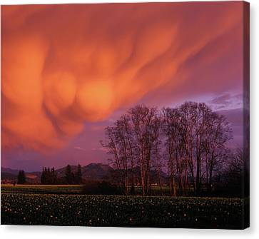 Mammatus Clouds In The Evening Light Canvas Print by Panoramic Images