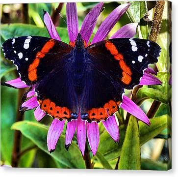 Mammoth Butterfly Canvas Print by Dan Sproul