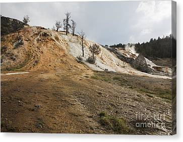 Canvas Print featuring the photograph Mammoth Hot Springs by Belinda Greb