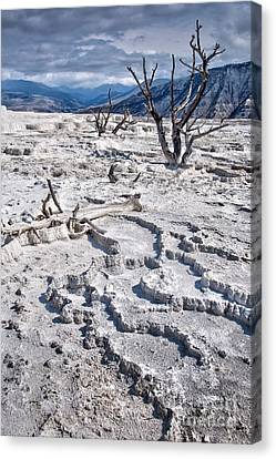 Mammoth Terraces Vertical Canvas Print by Delphimages Photo Creations