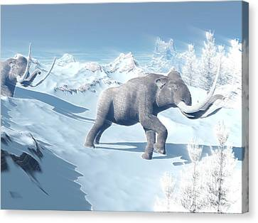 Mammoths Walking Slowly On The Snowy Canvas Print