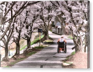 Man In Wheelchair Under Cherry Blossoms Canvas Print by Dan Friend