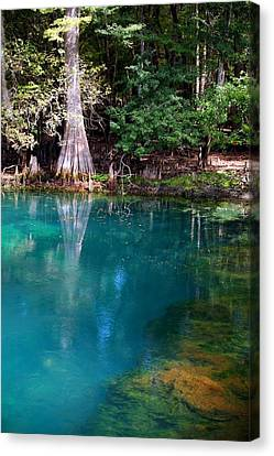 Canvas Print featuring the photograph Manatee Spring by Doug McPherson