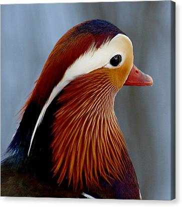 Canvas Print featuring the photograph Mandarin Duck by Bob and Jan Shriner