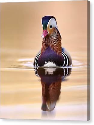 Mandarin Duck Drake Italy Canvas Print