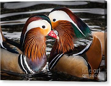 Canvas Print featuring the photograph Mandarin Lovers by John Wadleigh
