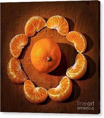 Mandarin - Vignette Canvas Print by Kaye Menner