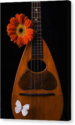 Mandolin With White Butterly Canvas Print by Garry Gay