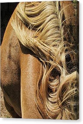 Mane Event Canvas Print by Shannon Story
