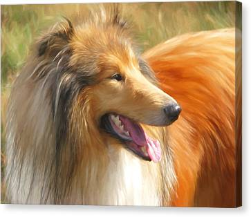 Maned Collie Canvas Print by Daniel Hagerman