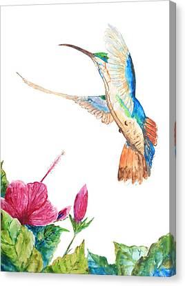 Mango Hummingbird Canvas Print by Patricia Beebe