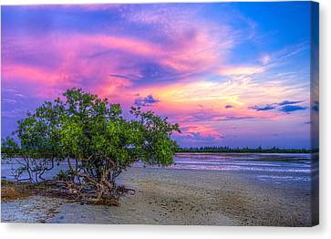 Salt Flats Canvas Print - Mangrove By The Bay by Marvin Spates