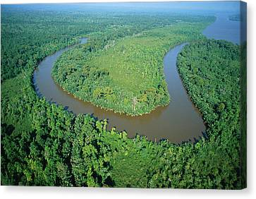 Mangrove Forest In Mahakam Delta Canvas Print