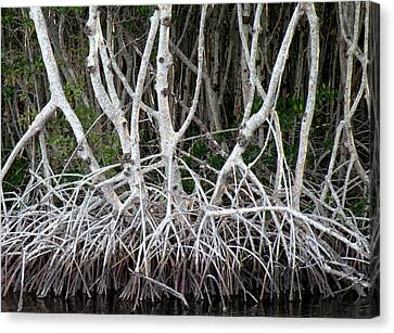 Mangrove Roots Canvas Print by Rosalie Scanlon