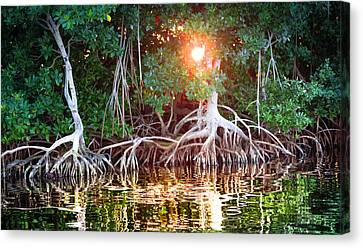 Mangrove Forest Canvas Print - Mangrove Sunset by Karen Wiles
