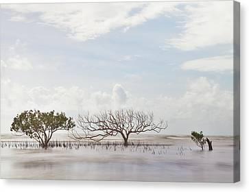 Mangrove Tree In Blurred Sea Canvas Print by Dirk Ercken